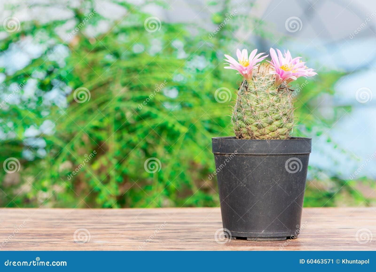 Cactus Avec La Fleur Rose Dans Le Pot De Fleur Sur La Table En Bois