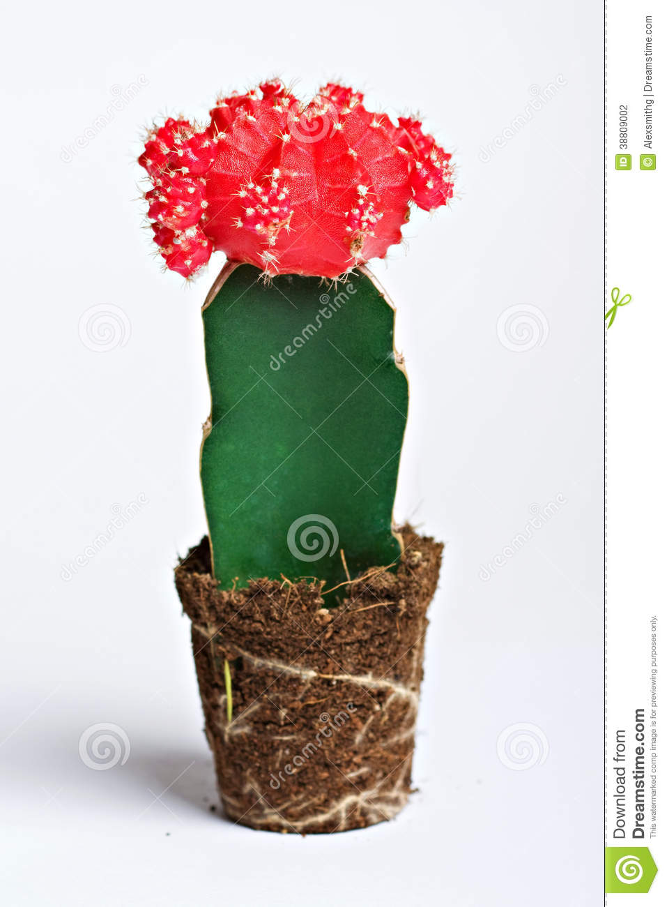 Cactus Avec La Fleur Rouge Photo Stock Image Du Salete 38809002