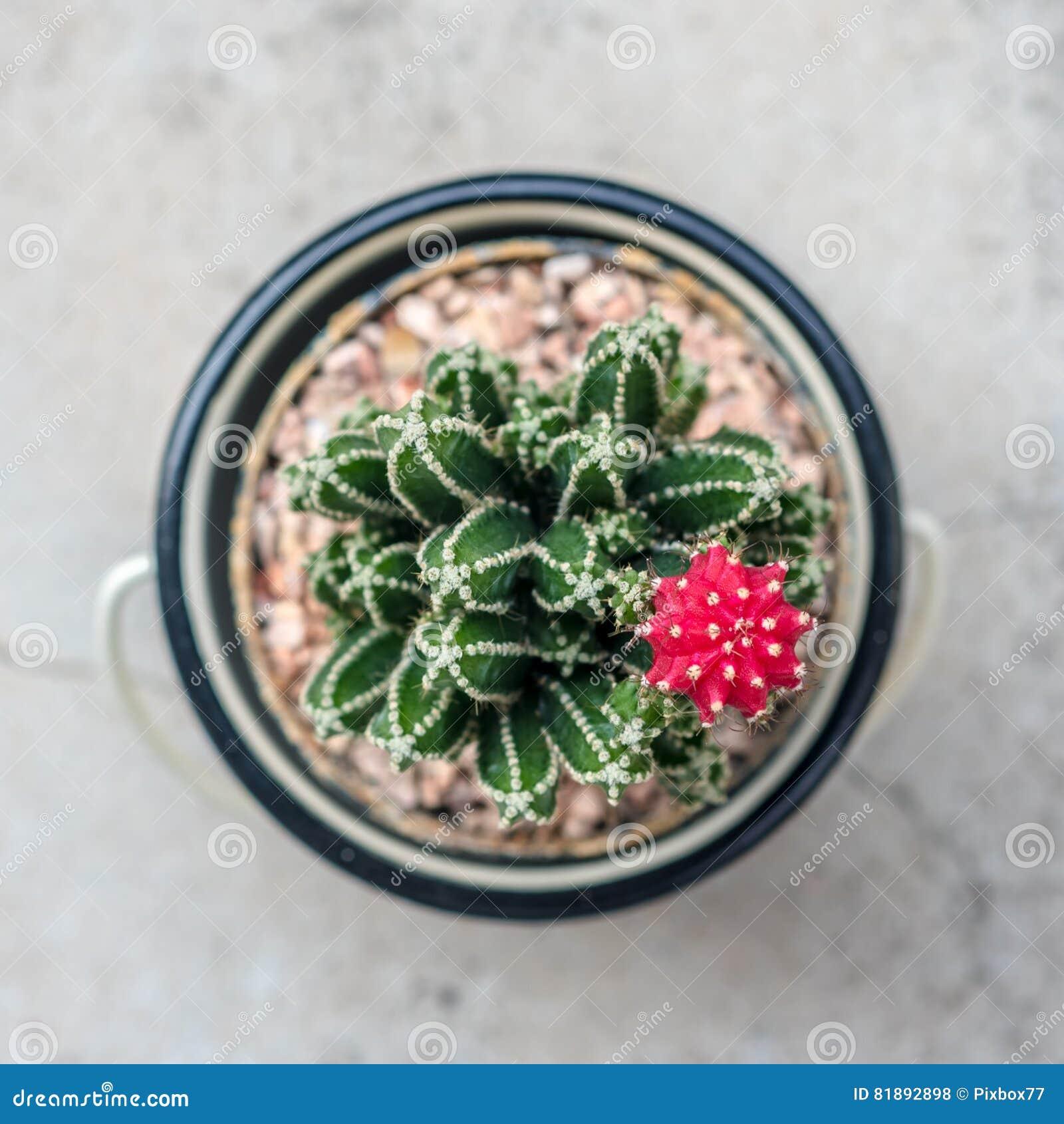 Cactus Bon Avec La Fleur Rose Photo Stock Image Du Floral Frais