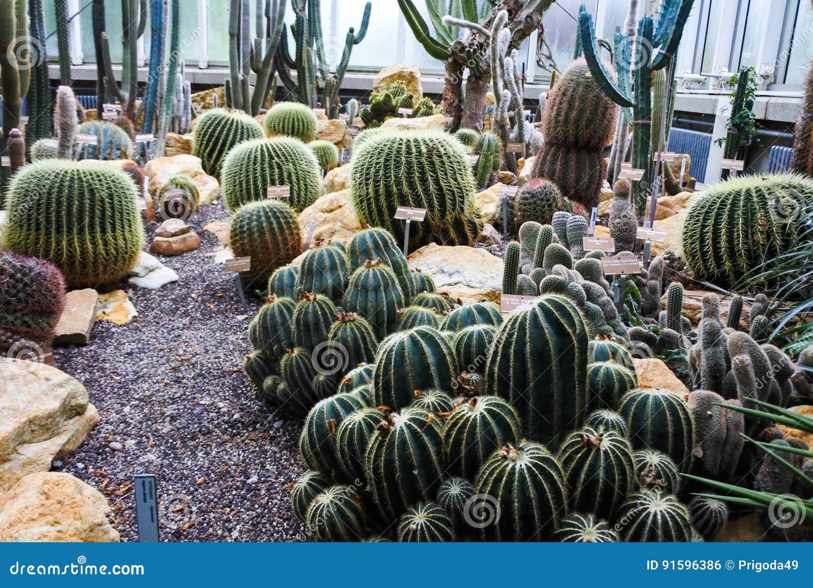 Cactus in a Botanical Garden in Geneva
