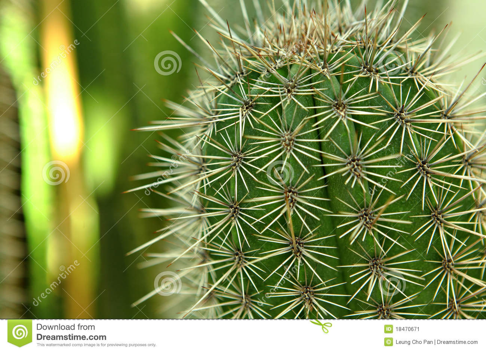 Cactus close up stock image. Image of botanical, globular - 18470671