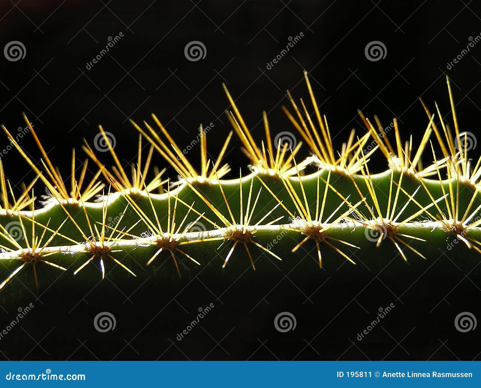 Cactus dans la vue horizontale