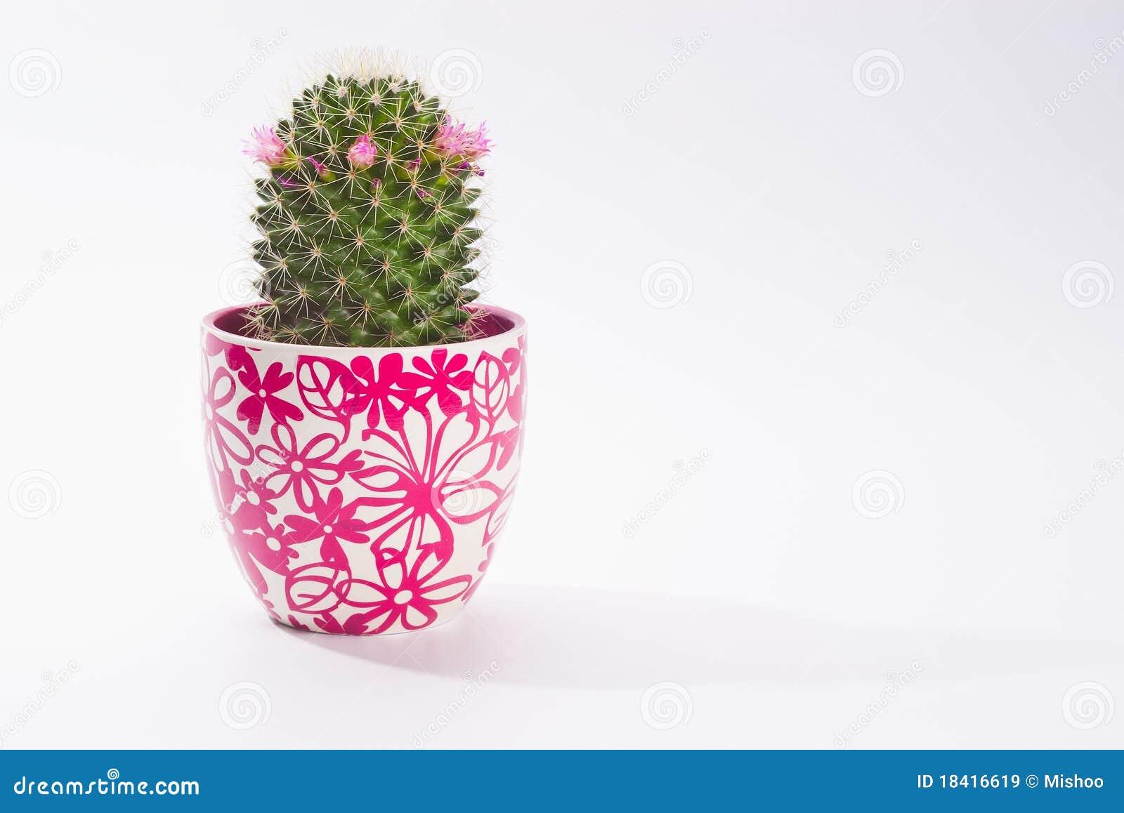 Cactus dans le bac