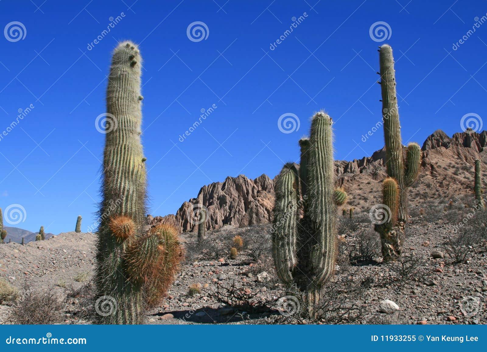 Cactus dans les déserts