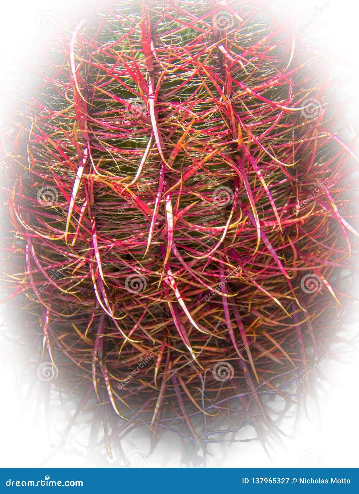 Cactus de barril del gancho de pescados