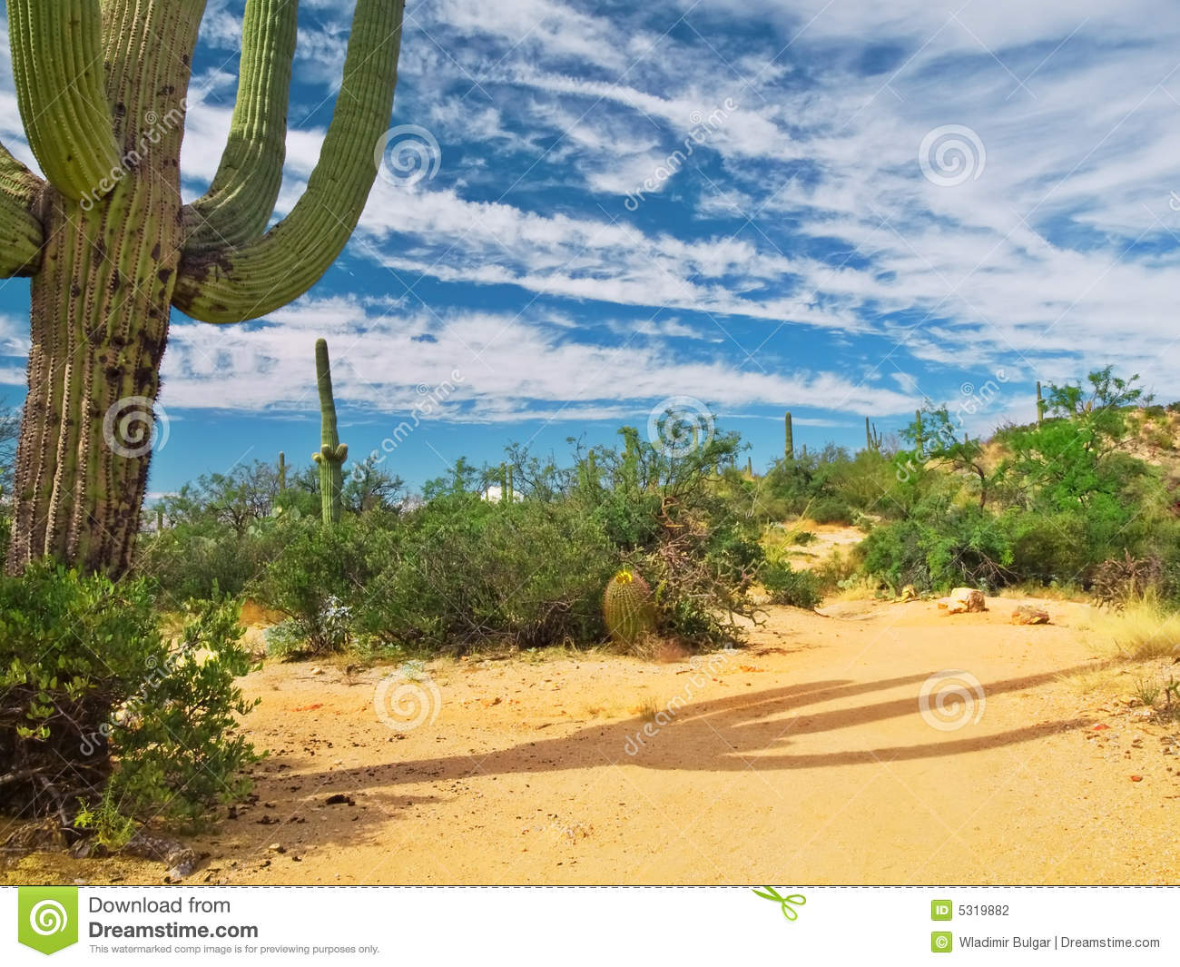 Download Cactus del deserto fotografia stock. Immagine di verde - 5319882