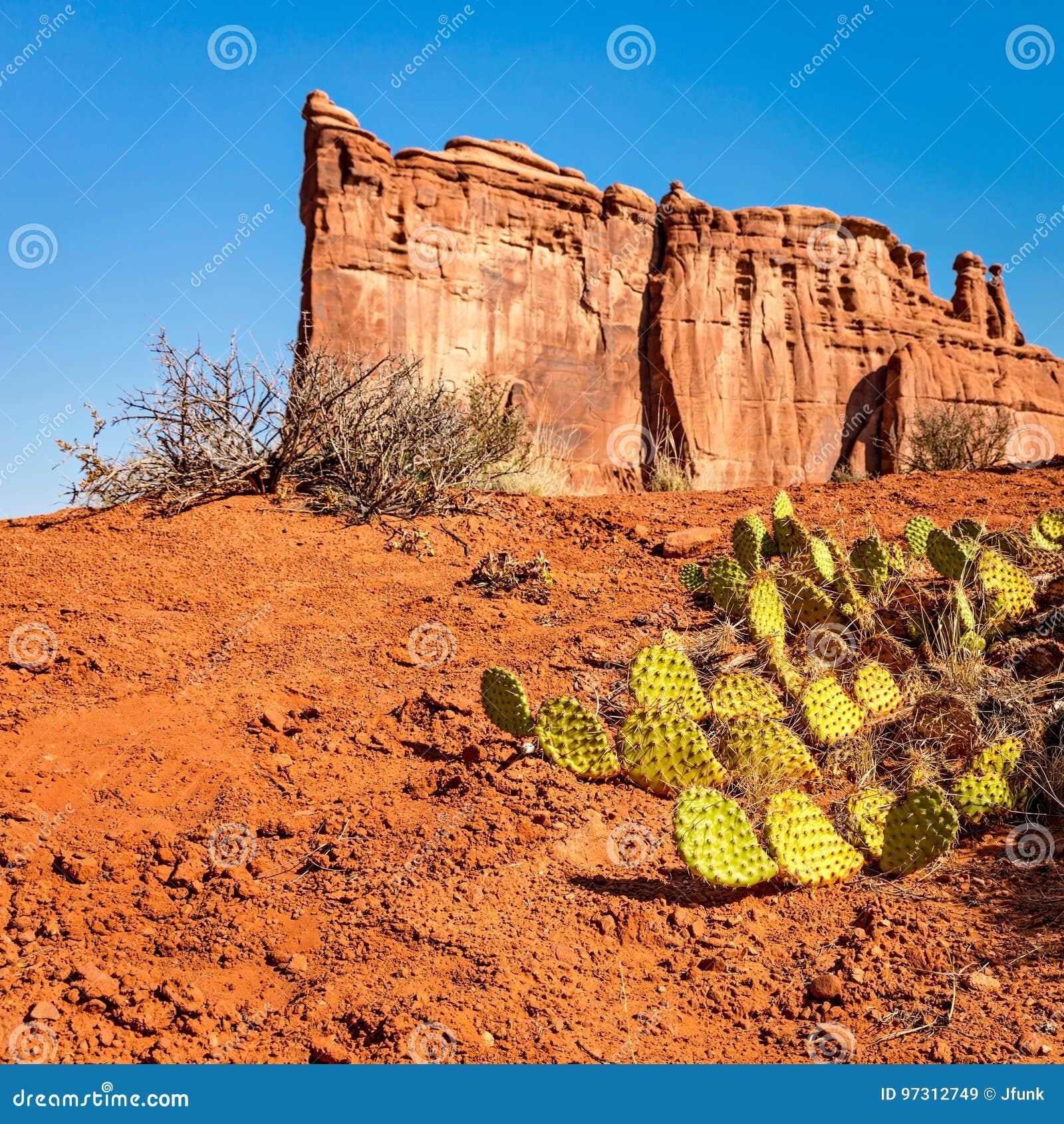 Cactus del higo chumbo en parque nacional de los arcos