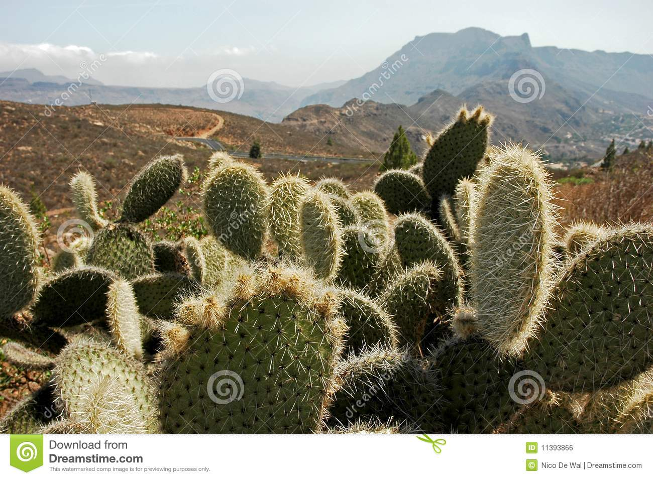 Multiple cacti cactus plants in desert mountain landscape HD Wide Wallpaper for Widescreen