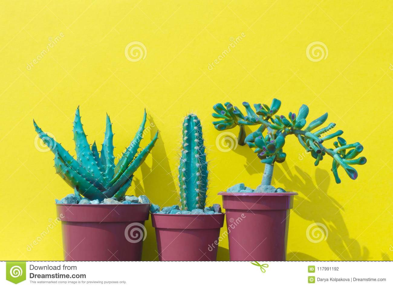 Cactus On The Desk With Yellow Wall And Minimal Style. Stock Photo ...