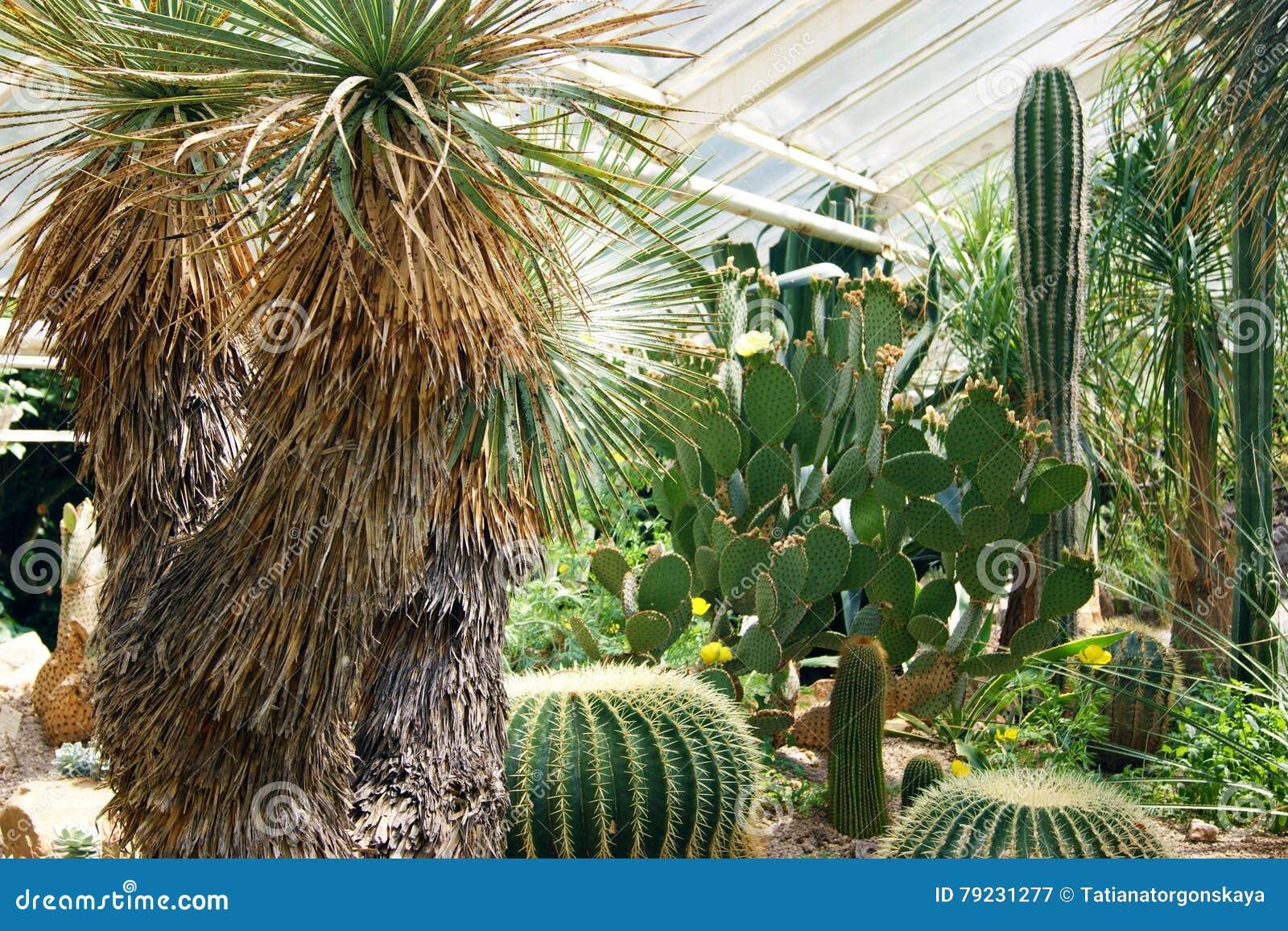 Cactus E Palme Nel Giardino Botanico Immagine Stock Immagine Di