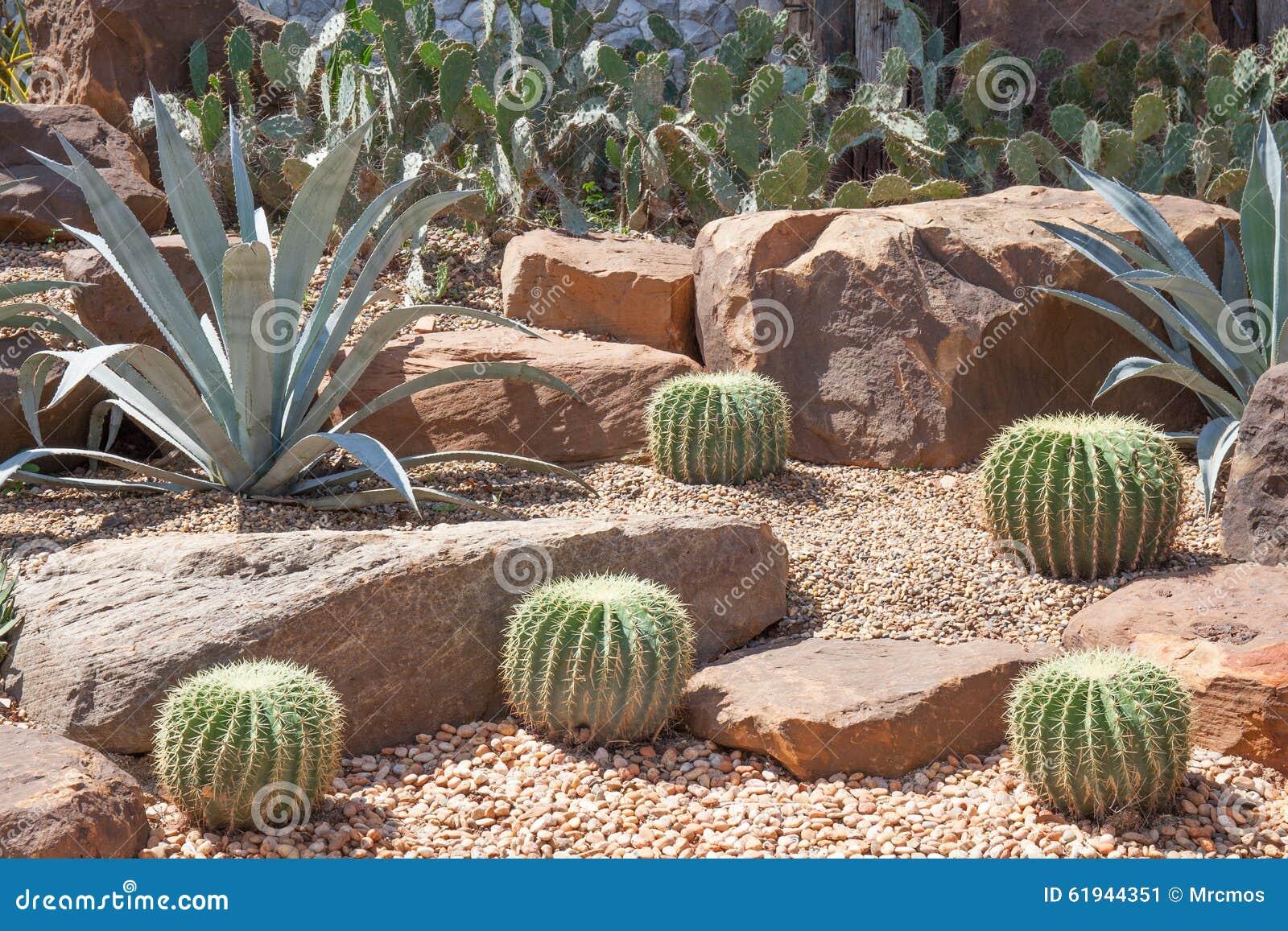 Cactus en el jard n bot nico modelo del jard n del for Jardin del desierto