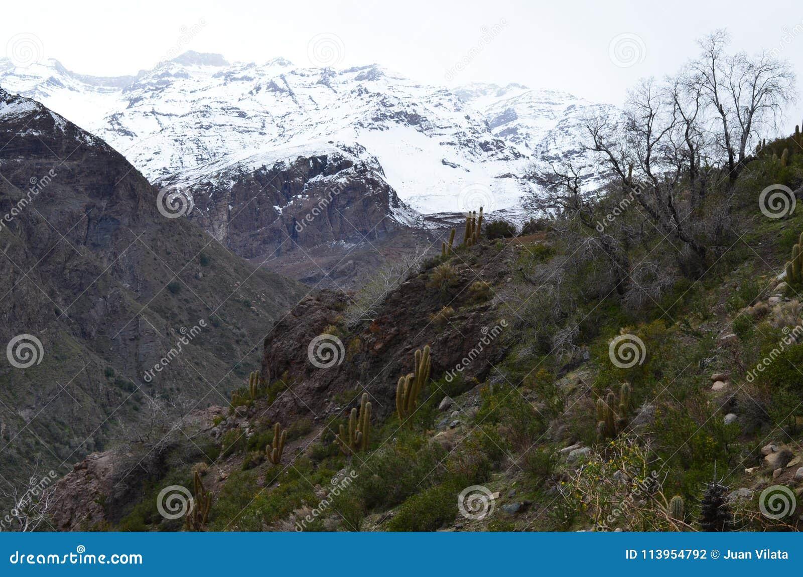 Cactus en la reserva nacional de RÃo Blanco, Chile central, un alto valle de la biodiversidad en Los los Andes