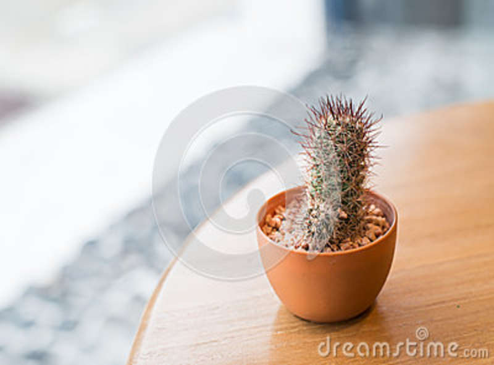 Cactus en la tabla de madera