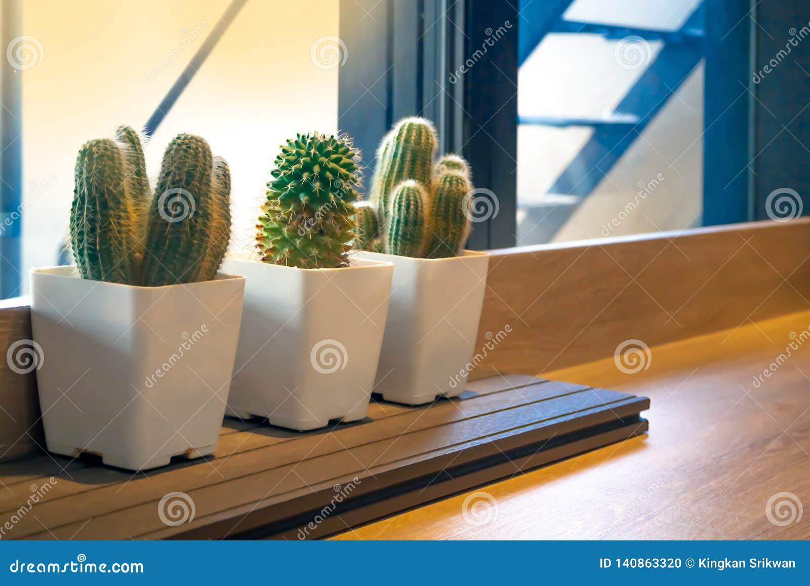 Cactus en los potes blancos
