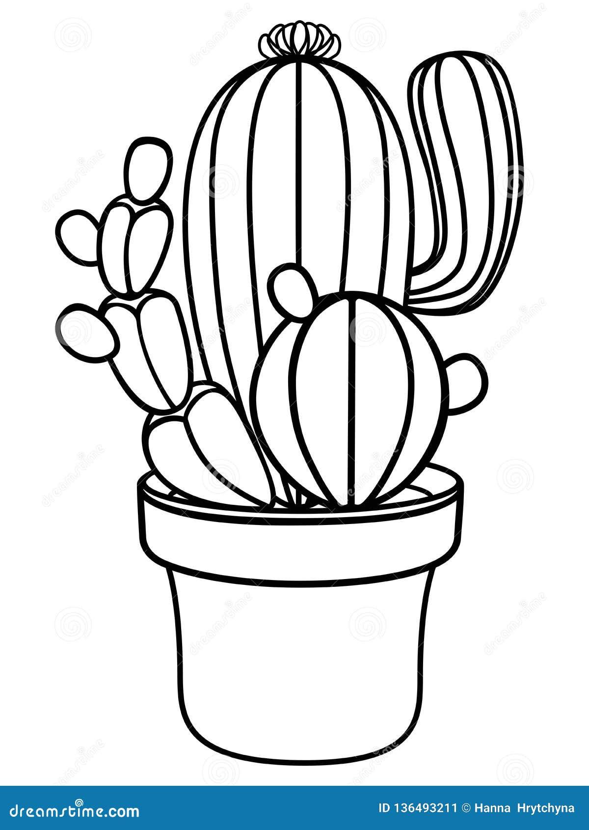 Cactus En Una Maceta Planta Casera Cactus Imagen Linear De