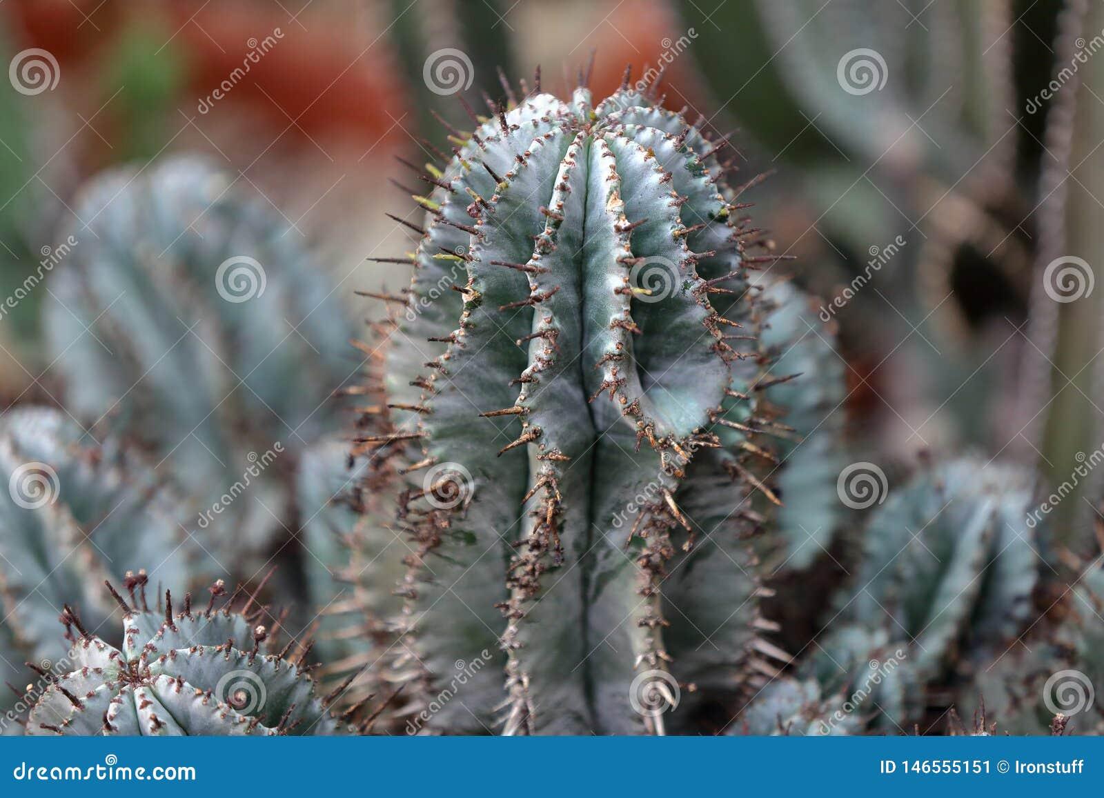 Cactus ex?tico raro
