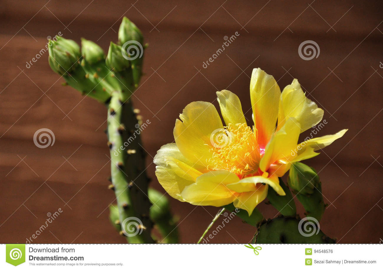 Cactus flower stock photo. Image of inferior, other, bloom - 94548576