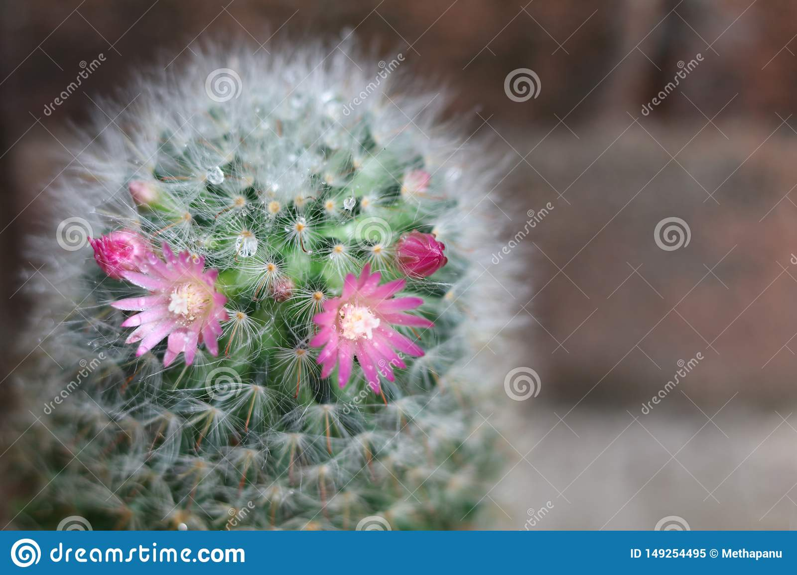 Cactus with flower blooming