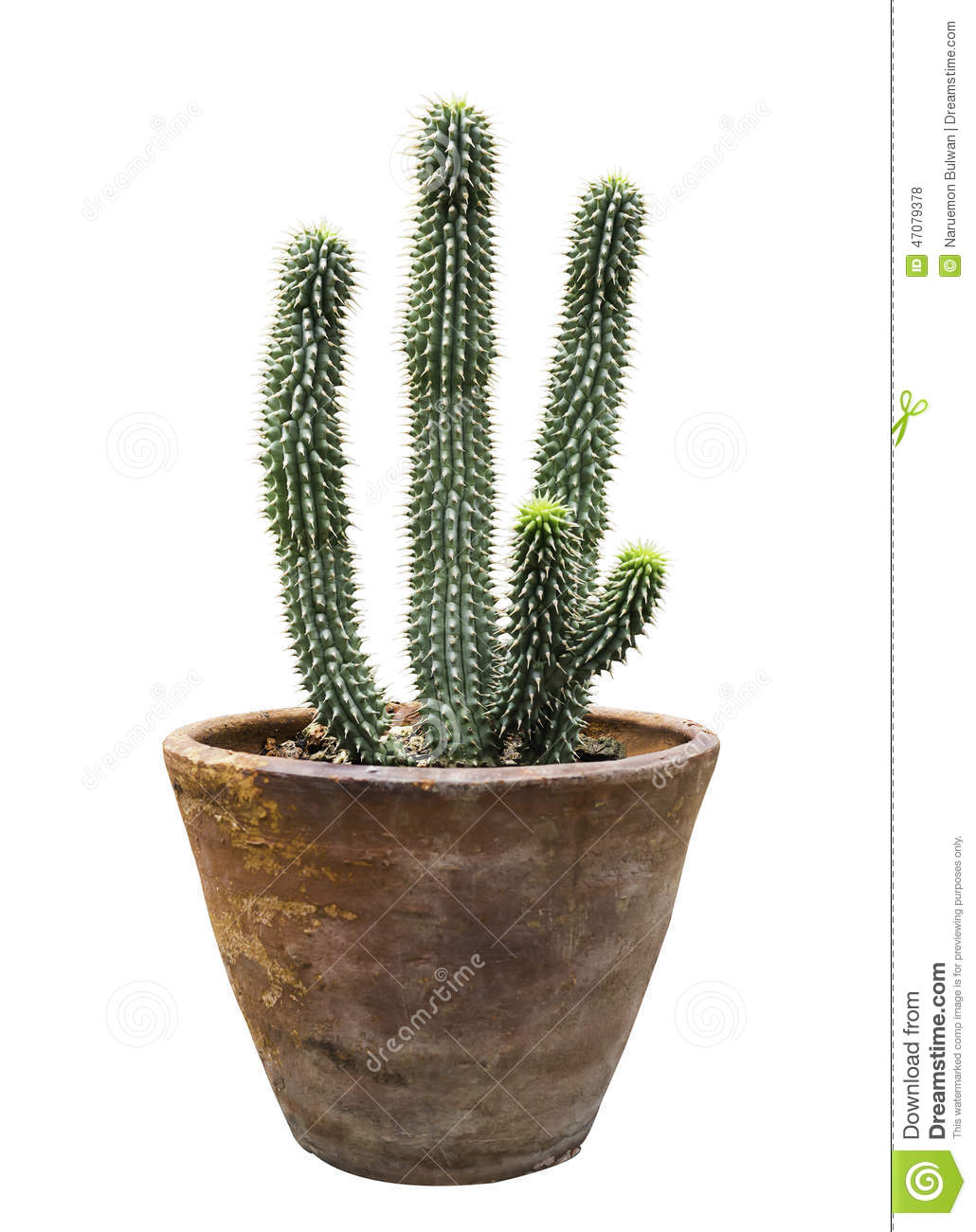 cactus in flower pot isolated stock photo image of tropical flowerpot 47079378. Black Bedroom Furniture Sets. Home Design Ideas