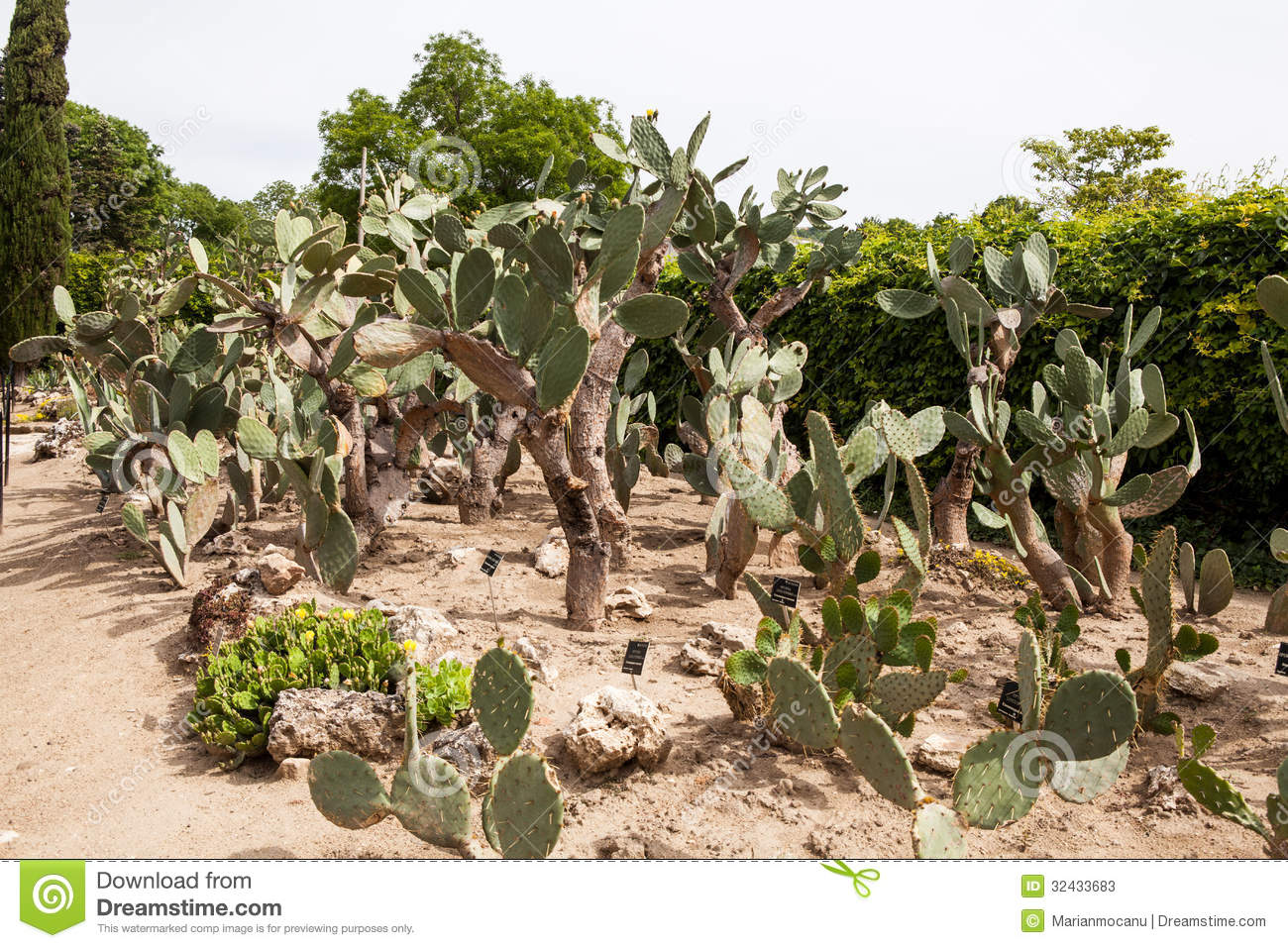 Cactus Garden In Balchik Stock Photos - Image: 32433683