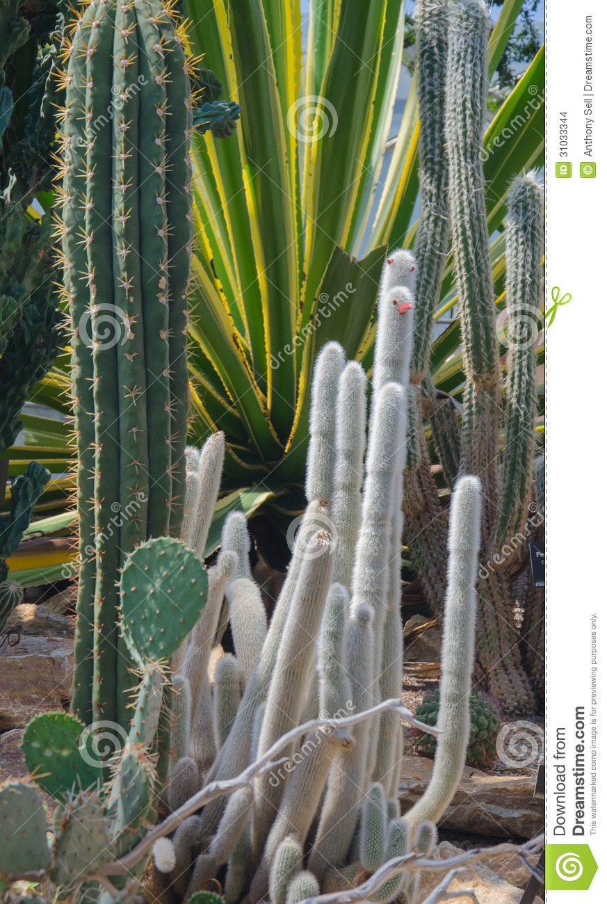 cactus garden stock photo  image of bloom  nature  plants