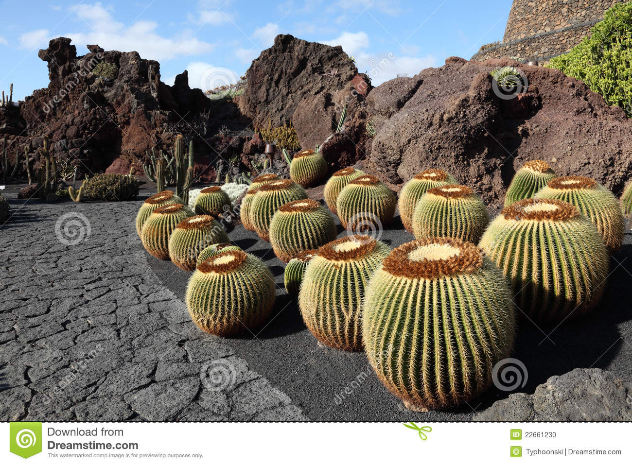 Cactus garden lanzarote spain stock photo image 22661230 for Jardin cactus lanzarote