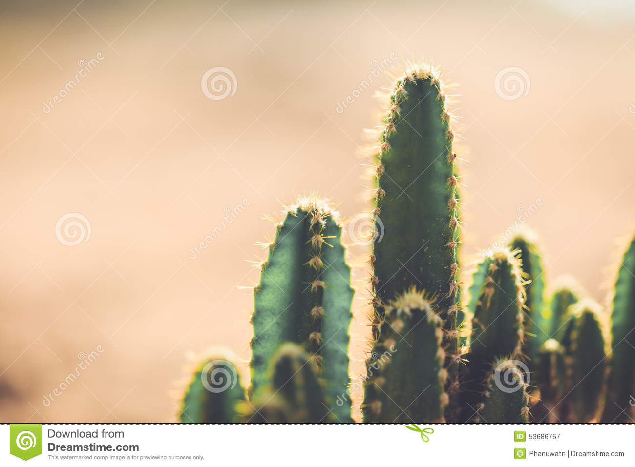 cactus in the garden with vintage style picture stock