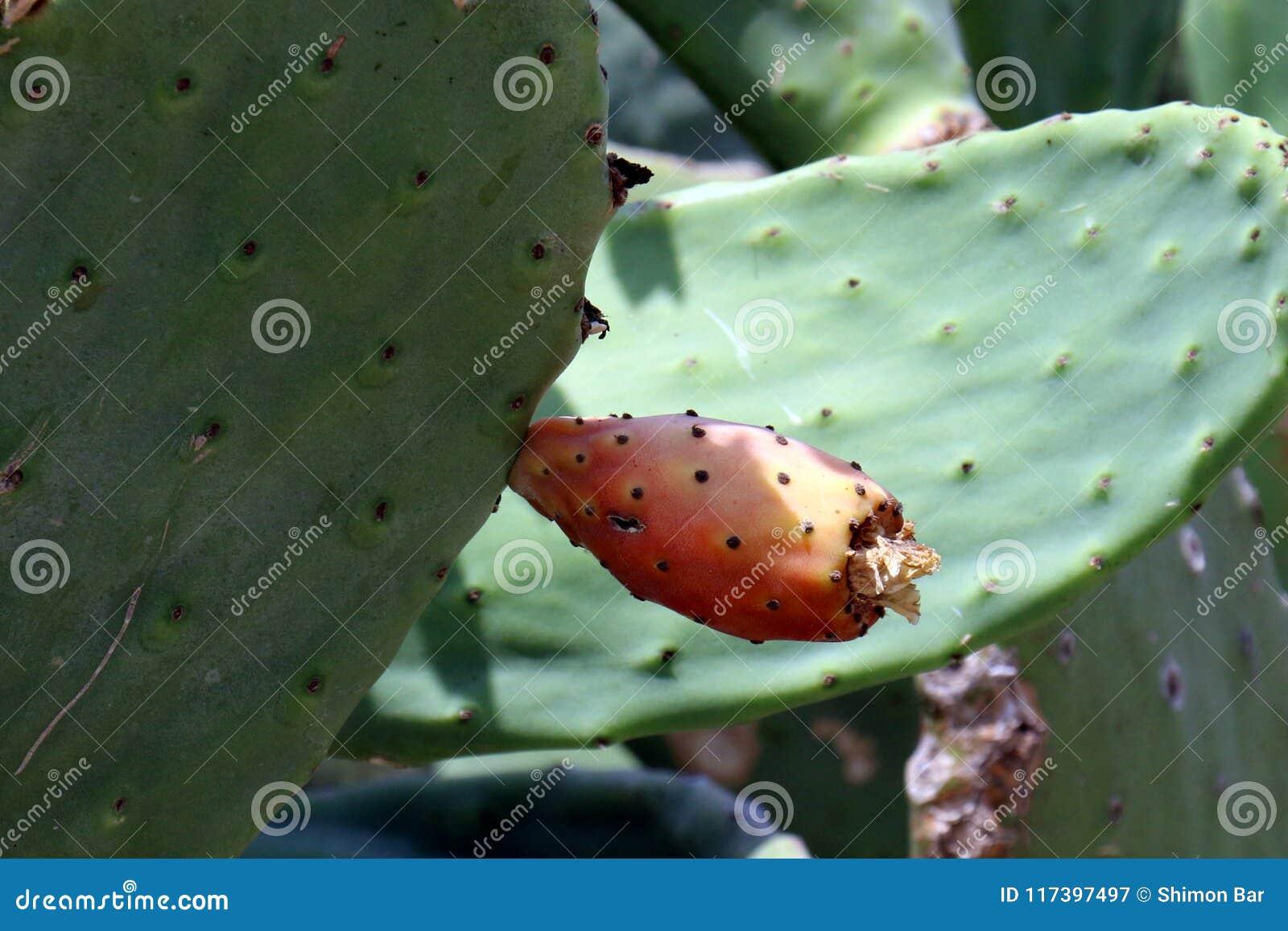 Cactus grande y espinoso
