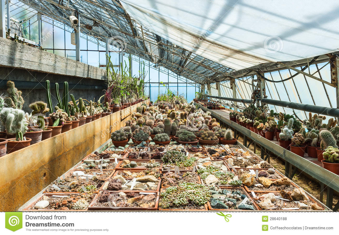 Cactus In A Greenhouse In The Garden Of Exotic Plants