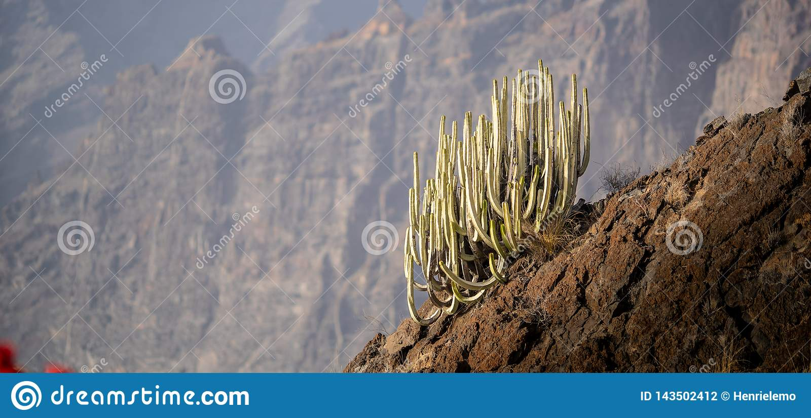 Cactus on a hill with bokeh on the background to isolate the cactus and showcase the high altitude and scale