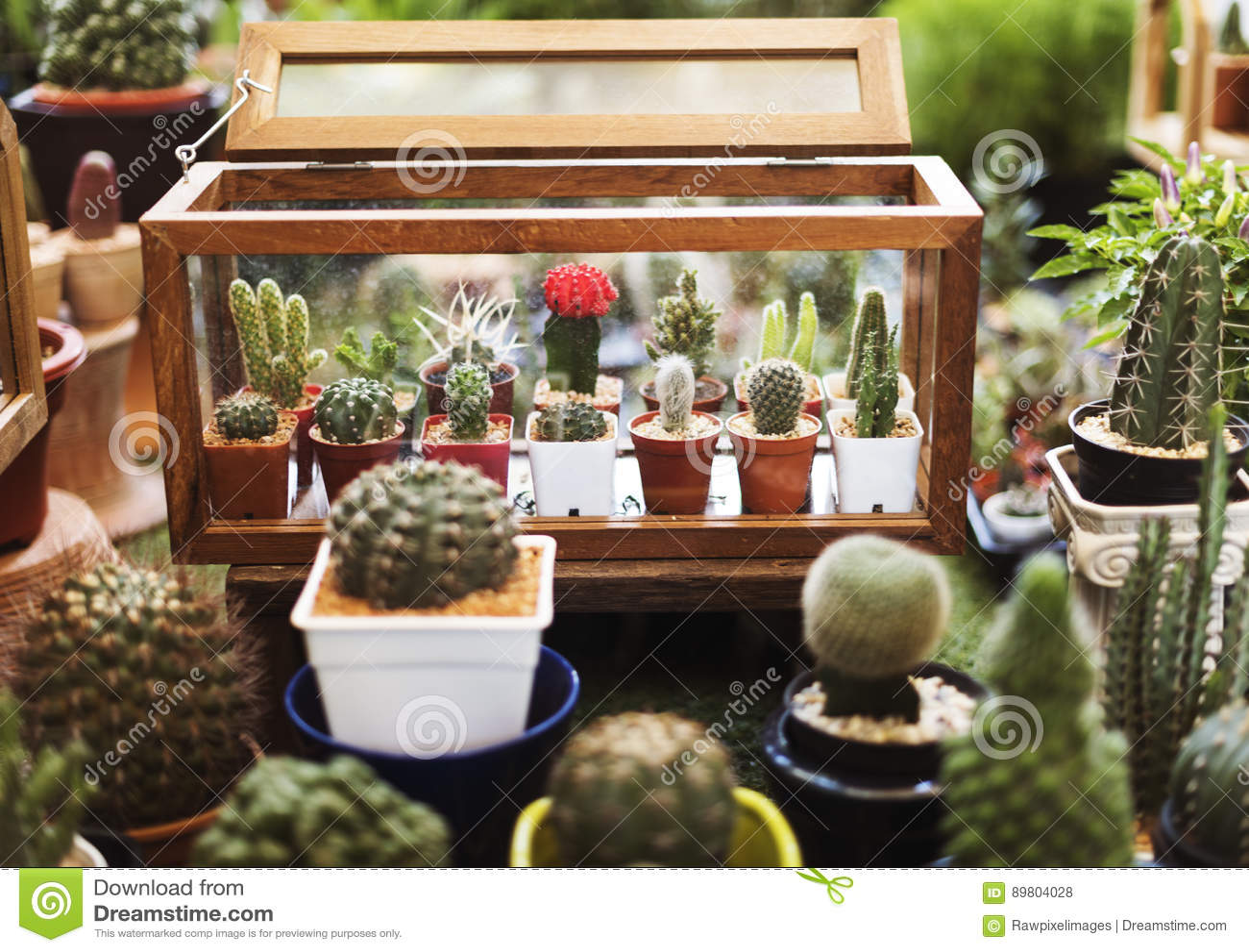 Cactus Houseplant Collection Decoration Set Stock Photo Image Of