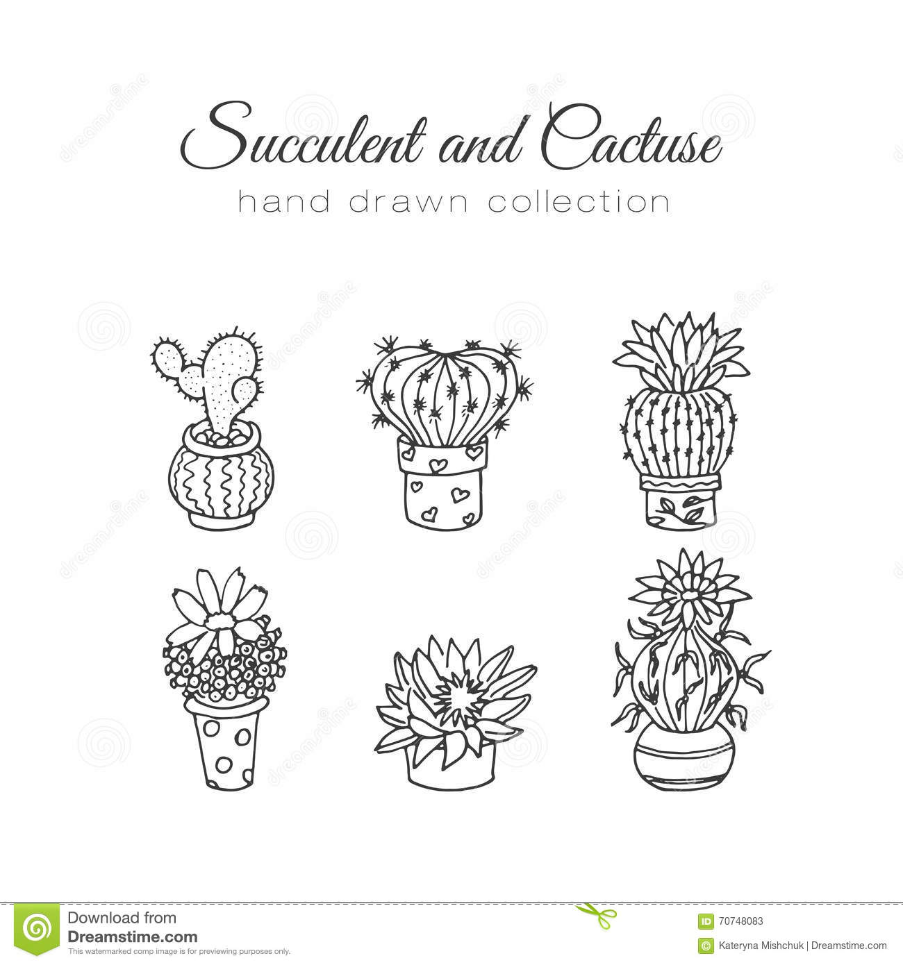 Cactus Illustration. Vector Succulent And Cacti Hand Drawn ...