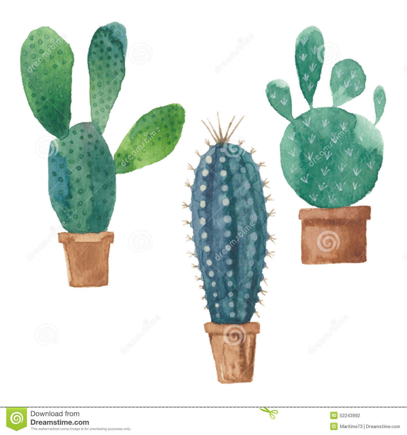 Cactus Isolated On White Background Vector Watercolor