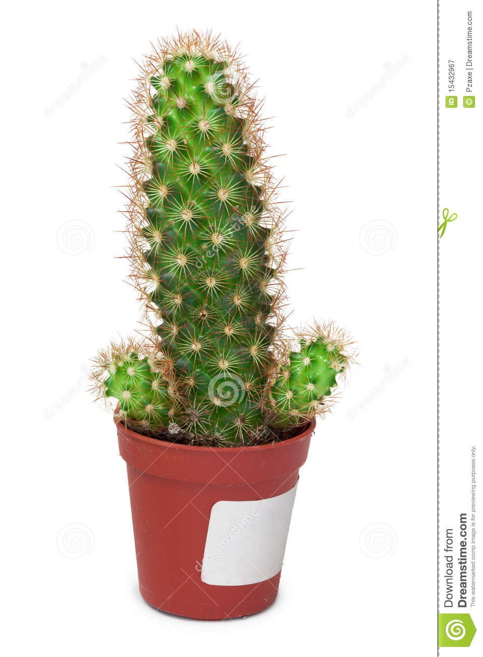 cactus like a penis on white background royalty free stock photography image 15432967. Black Bedroom Furniture Sets. Home Design Ideas