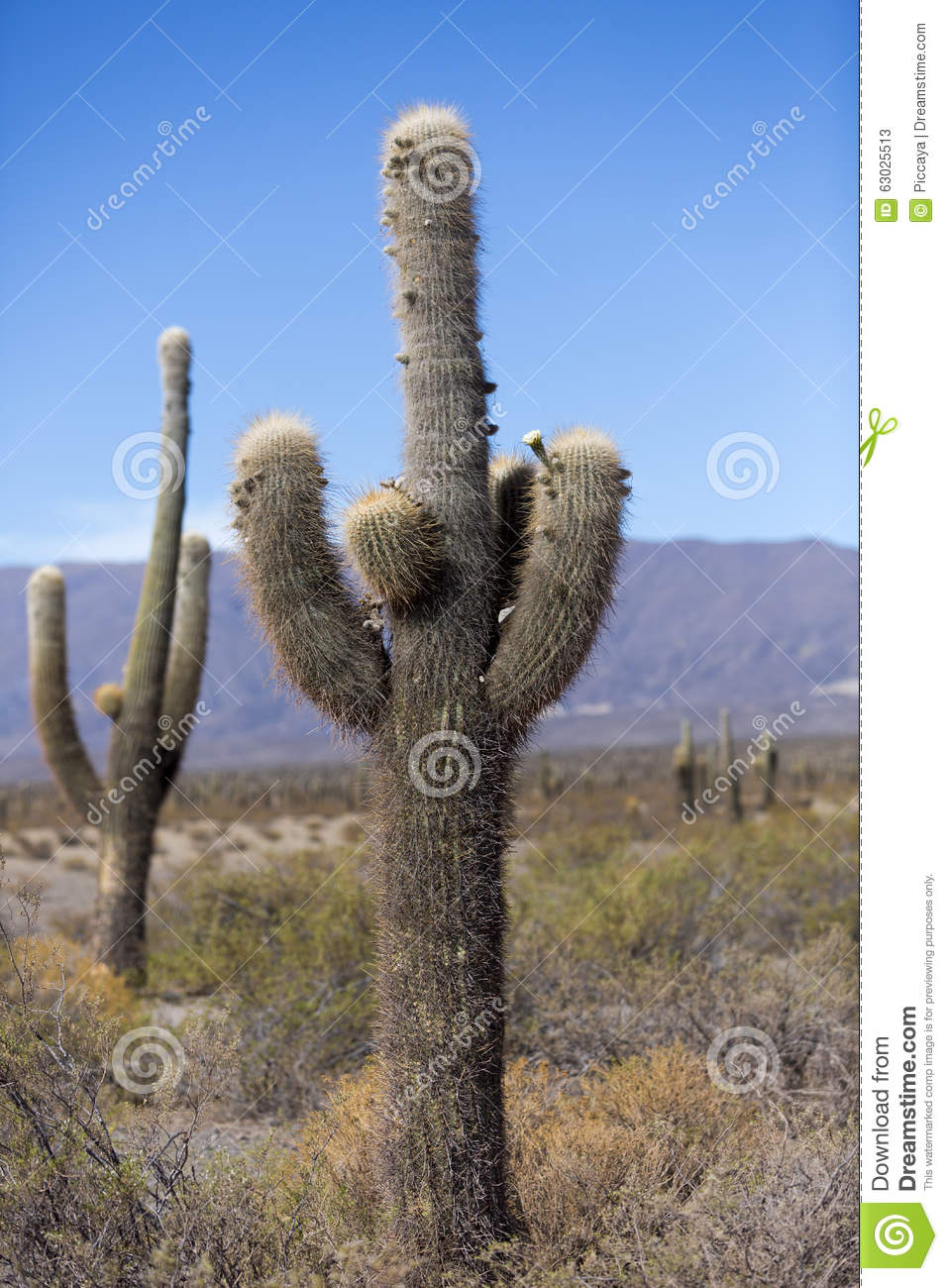 Cactus in los cardones national park in northern argentina for Cactus argentina