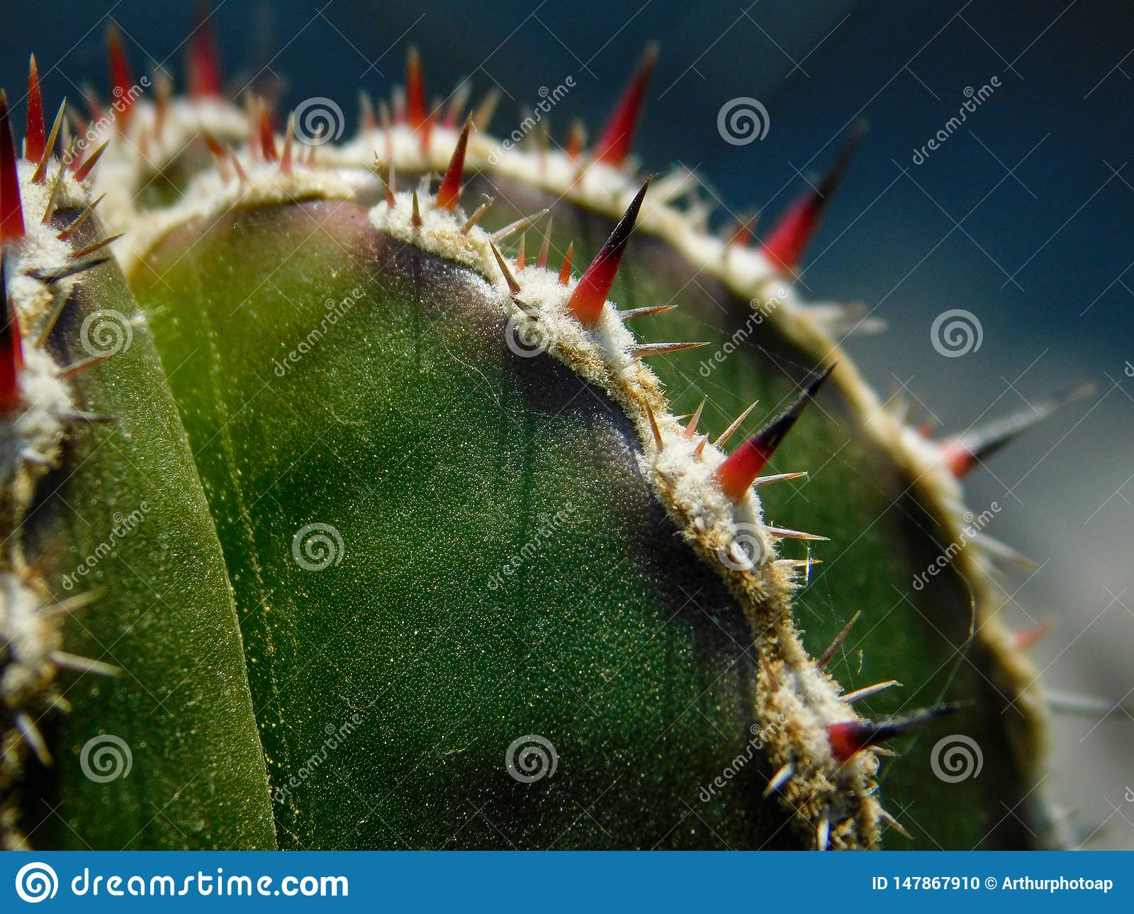 Cactus on macro