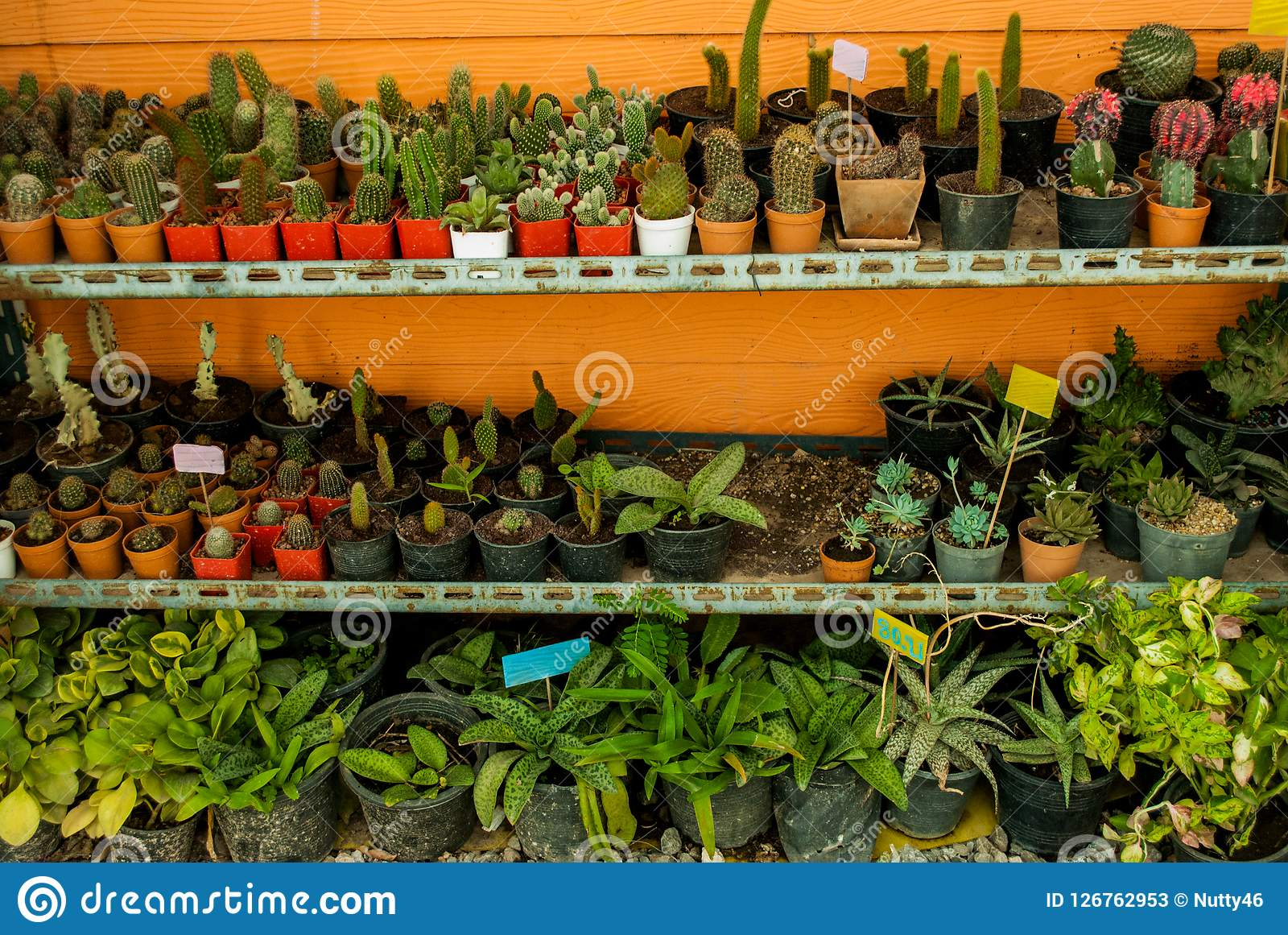 Cactus and many varieties of plants in pots
