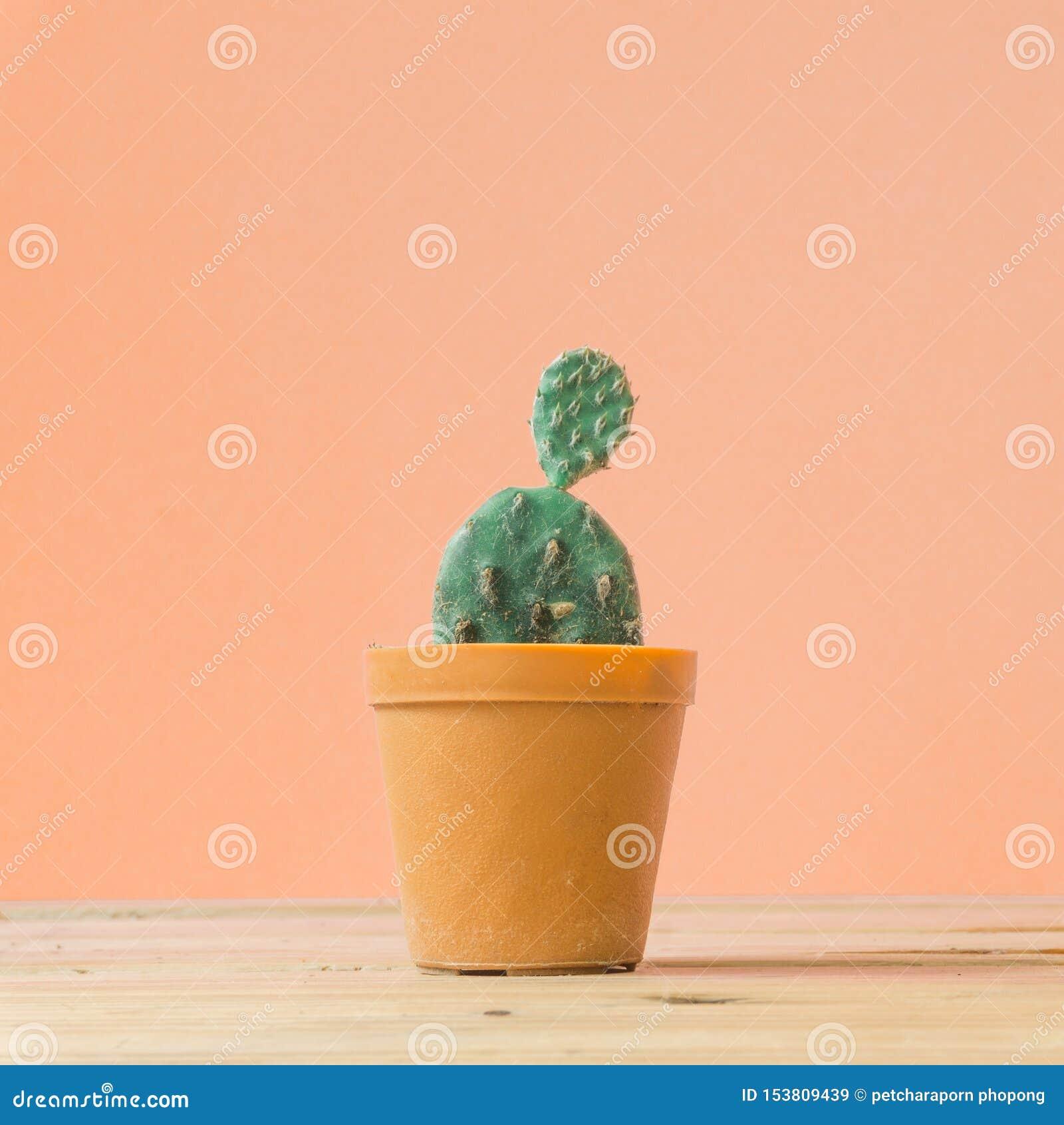 Cactus. Minimal creative stillife on wooden table and pastel orange
