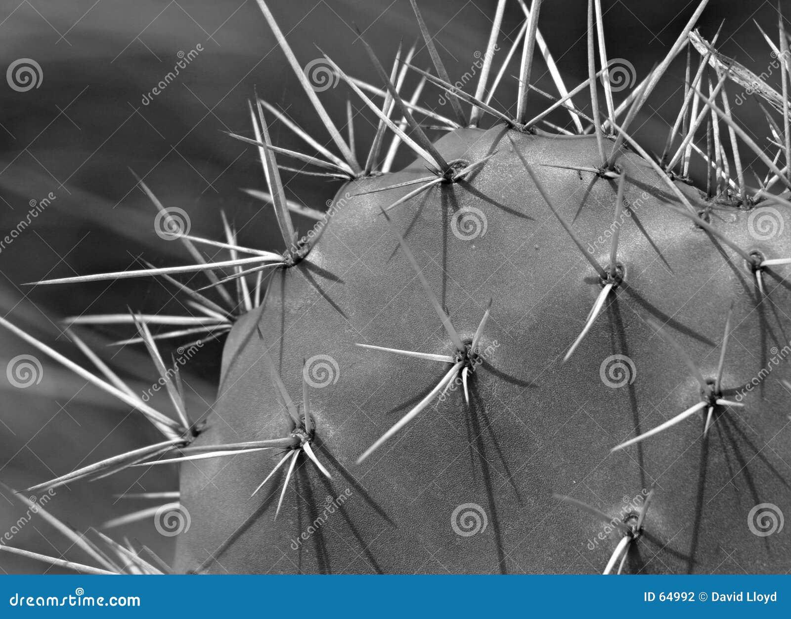Cactus (monochrome)