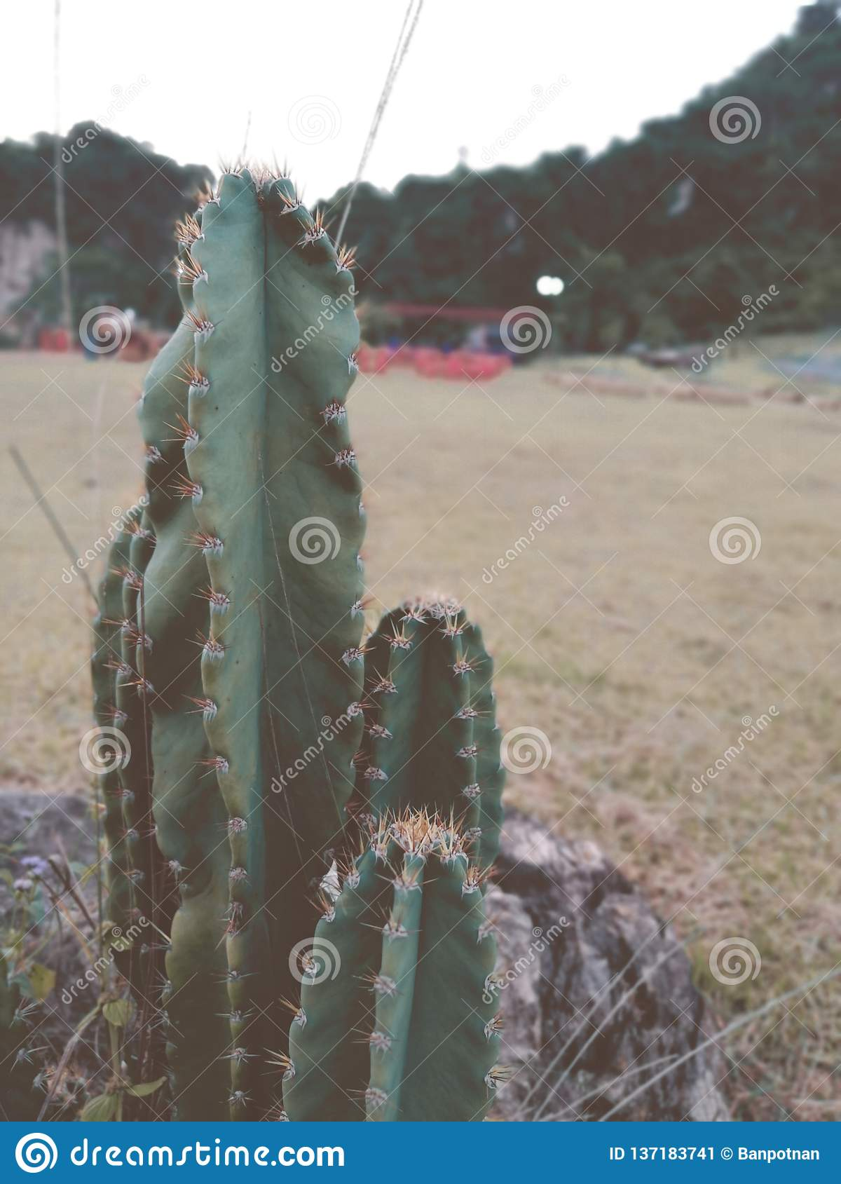 Cactus and mountains landscape