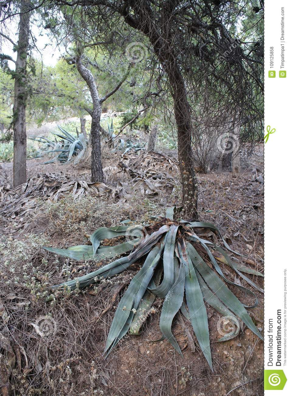 Cactus And Other Plants In Park On Likavittos Hill Athens Stock
