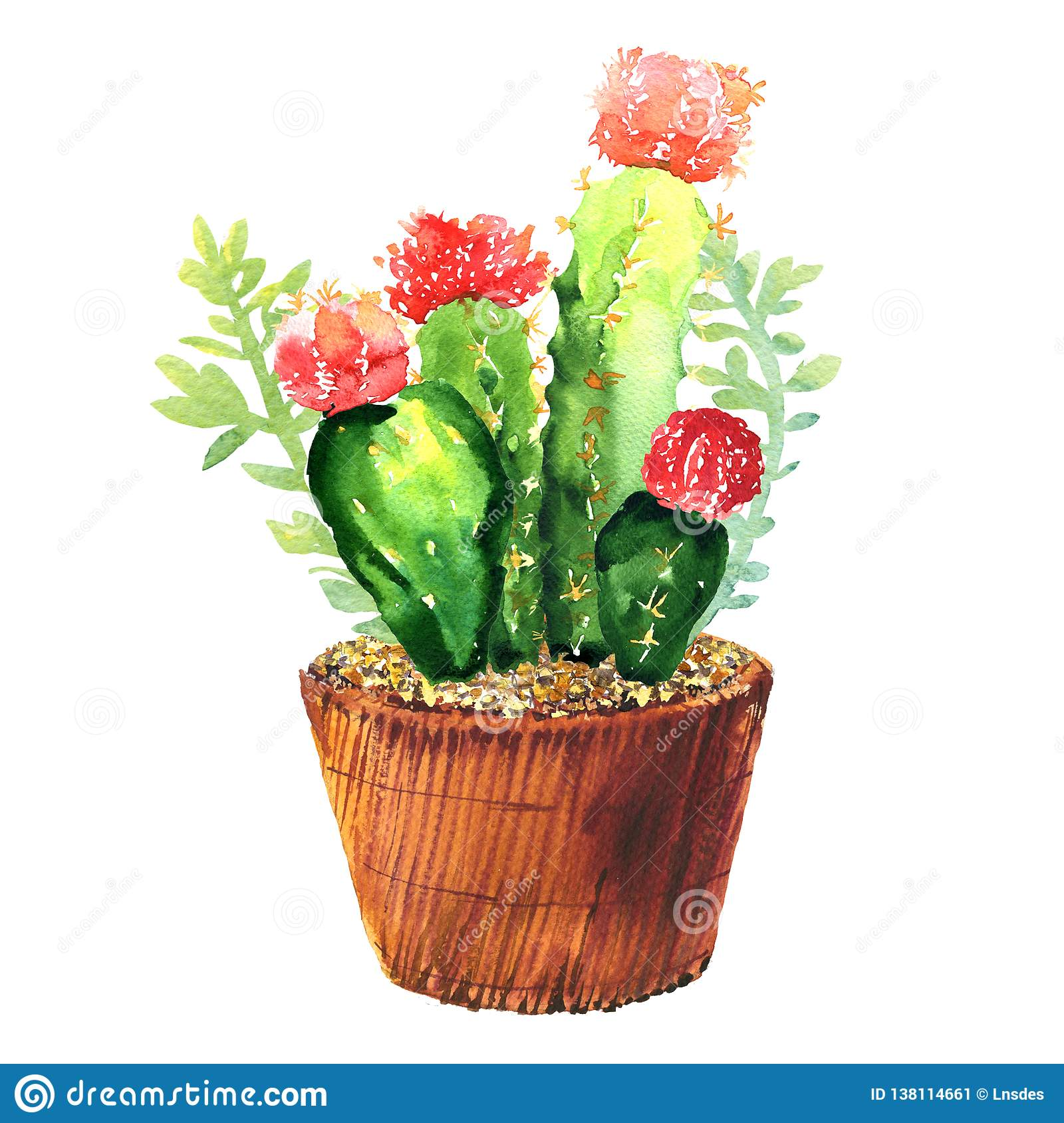 Cactus with pink flower, succulent in pod, tropical blossom cactus species, flowering green house plant, flowers design
