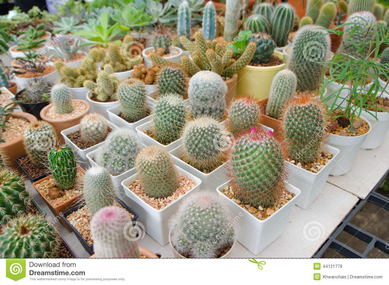 cactus plant in flower pot & Cactus plant in flower pot stock image. Image of home - 44121779