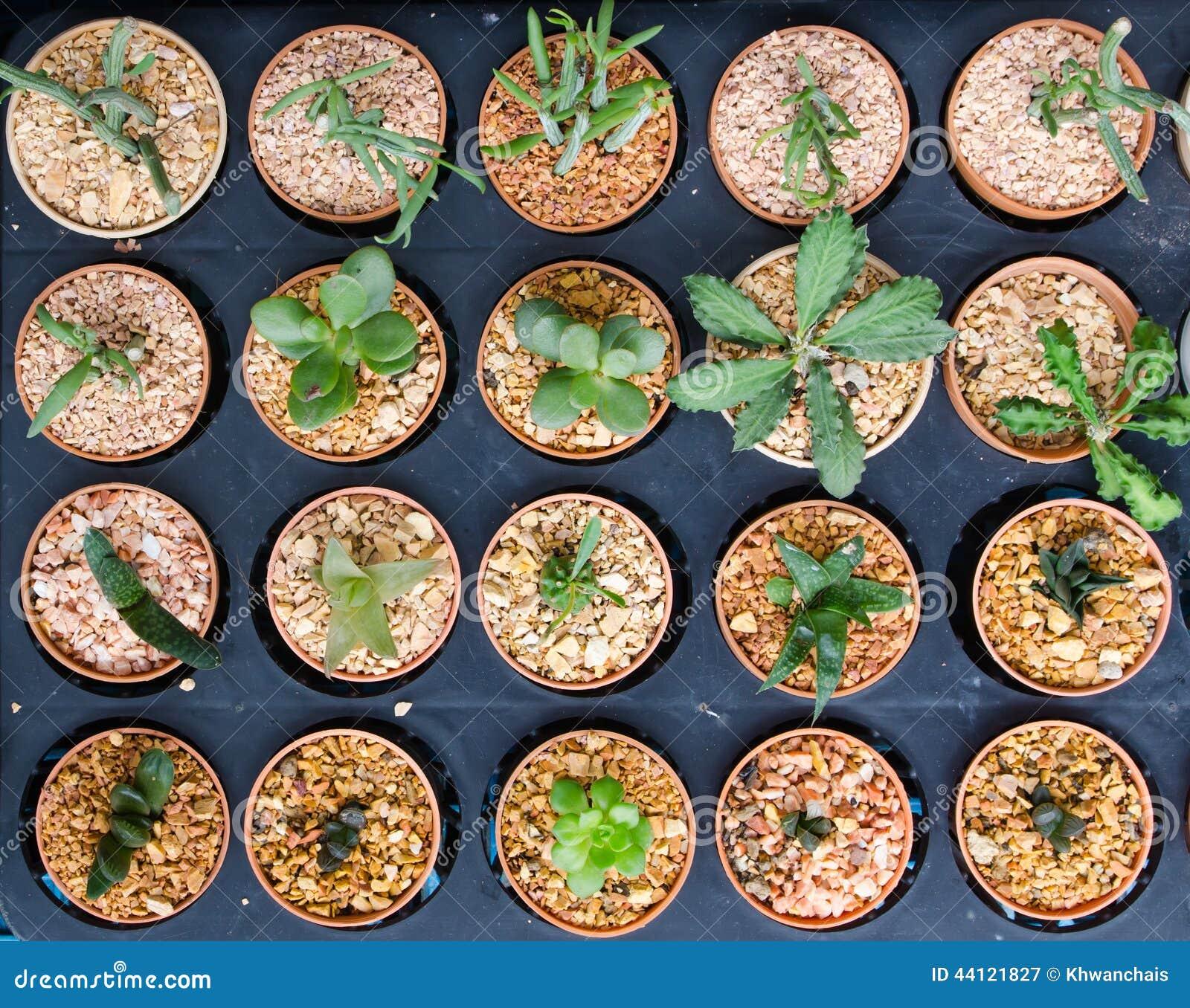 Cactus Plant In Flower Pot Stock Photo Image 44121827