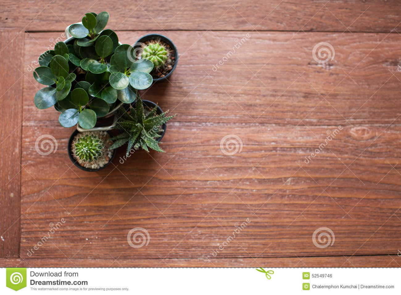 Succulent or cactus on wooden table royalty free stock for Wooden cactus planter
