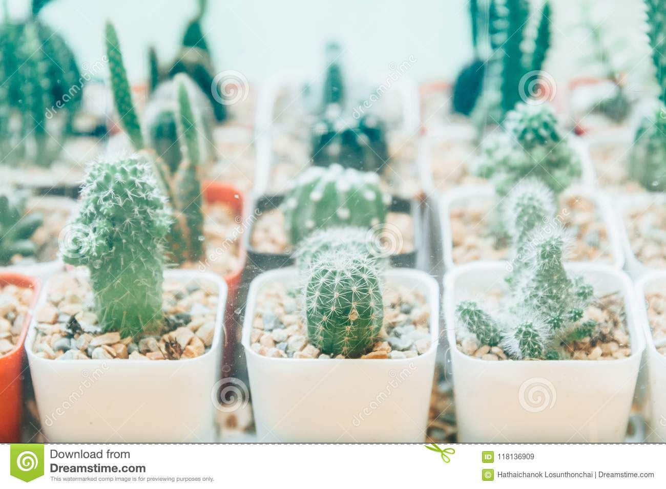 Cactus Plant White Succulent Glass Home Pot Vase Background Potted Succulents Decoration Small Table Terra Stock Image Image Of Natural Cacti 118136909