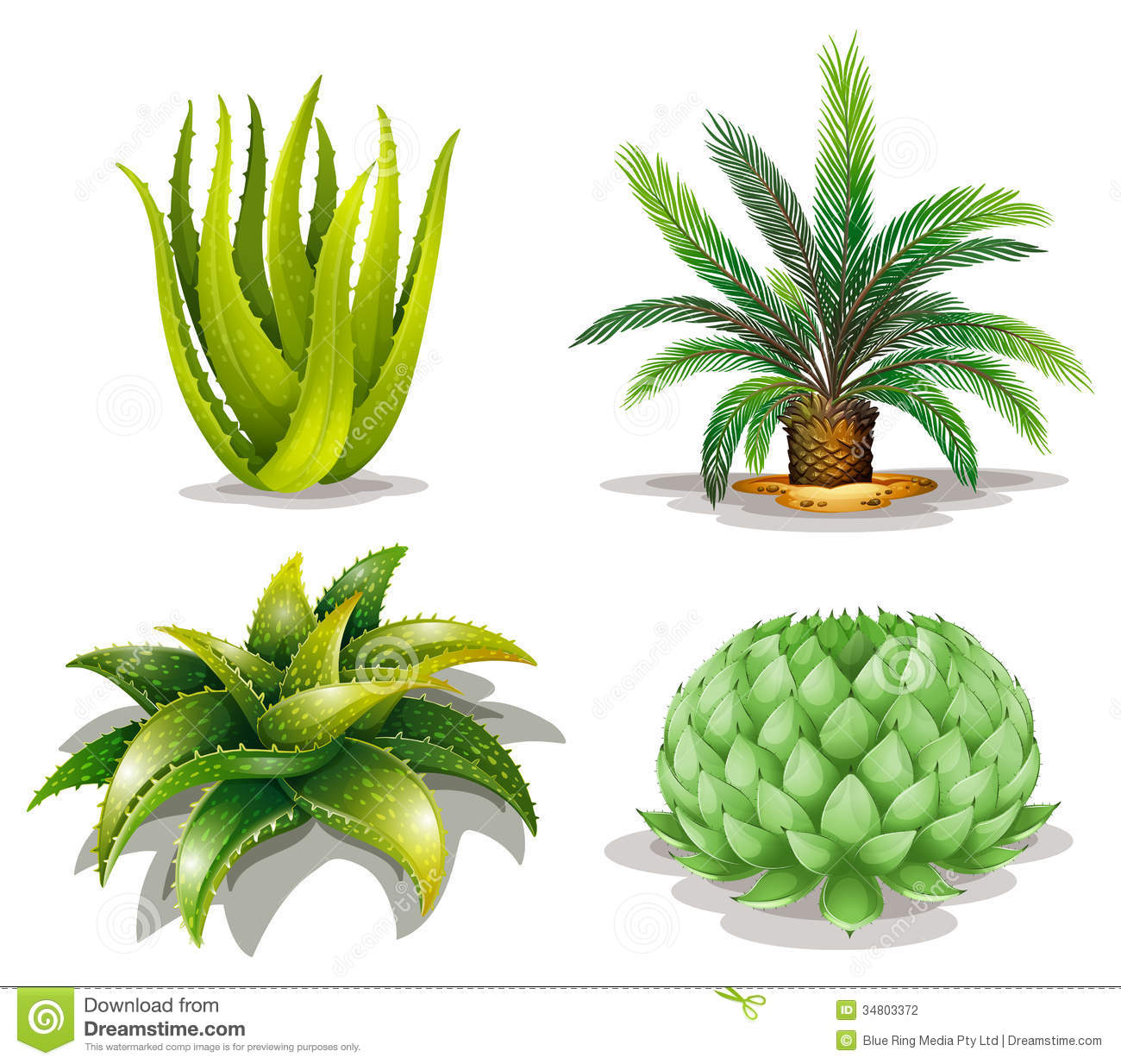 Illustration of the cactus plants on a white background.