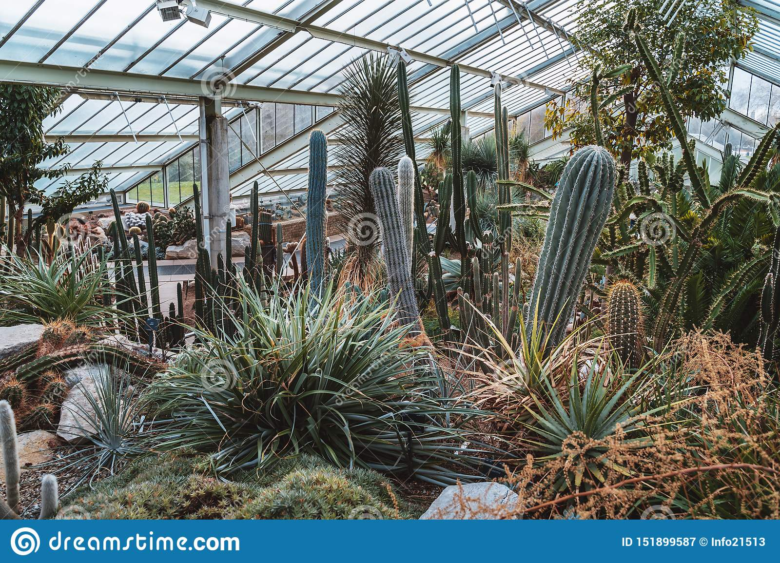 Cactus and plants from ten different climate zone