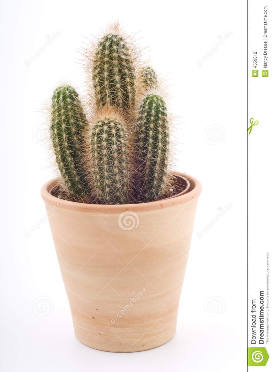 cactus in a pot stock photo image of isolated rural 4559012. Black Bedroom Furniture Sets. Home Design Ideas