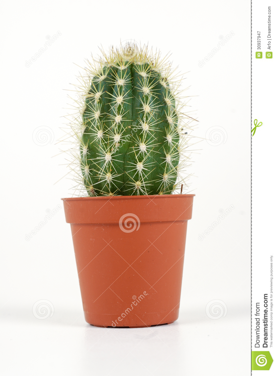 cactus in a pot stock image image of close up growing 30937947. Black Bedroom Furniture Sets. Home Design Ideas